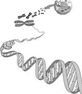 Malattie rare e cromosomopatie