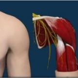 Chirurgia e Artroscopia Spalla e Gomito