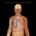 SintomiEbola.svg (1)
