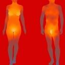Le Zone erogene. <br />La sessualità non è circoscritta ai genitali, ma è quella dimensione degli affetti e del comportamento umano legati in maniera indissolubile al piacere. <br />È attraverso il connubio mente, cuore e corpo che si possono provare e scambiarsi gioie travolgenti, ma esistono delle zone ricche di recettori sensoriali che se adeguatamente stimolate possono amplificare il nostro piacere … le zone erogene!<br />Una zona erogena è un'area del corpo umano, spesso un organo o parte di esso, la cui stimolazione esterna è legata all'eccitazione e al piacere sessuale. <br />Si distinguono in due categorie: quelle primarie e quelle secondarie.<br />Le zone erogene primarie sono strettamente correlate all'orgasmo e sono localizzate coinvolgono l'insieme degli organi genitali esterni (per gli uomini lo scroto e i testicoli, per le donne le labbra vulvari, l'ingresso della vagina e il pube, l'ano e il clitoride. <br />Per quanto riguarda le zone erogene secondarie, possono essere distinte in tre localizzazioni, la cui forza erogena si sviluppa in senso ascendente:<br />Le zone erogene extra-genitali, possono trovarsi in qualsiasi altro punto del corpo che sia in grado di risvegliare l'eros e l'energia vitale; <br />Le zone erogene para-genitali si trovano nei pressi del perineo, del ventre e dell'addome; <br />La sensibilità, l'estensione e il numero delle zone erogene è prettamente soggettiva ma può essere scoperta tracciando una mappa personale delle nostre zone erogene.  <br />Ricordiamoci sempre che la zona erogena principale è il cervello!!!