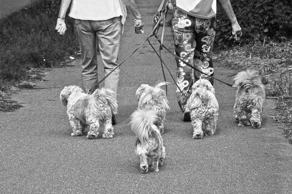 little-dogs-3430120_960_720